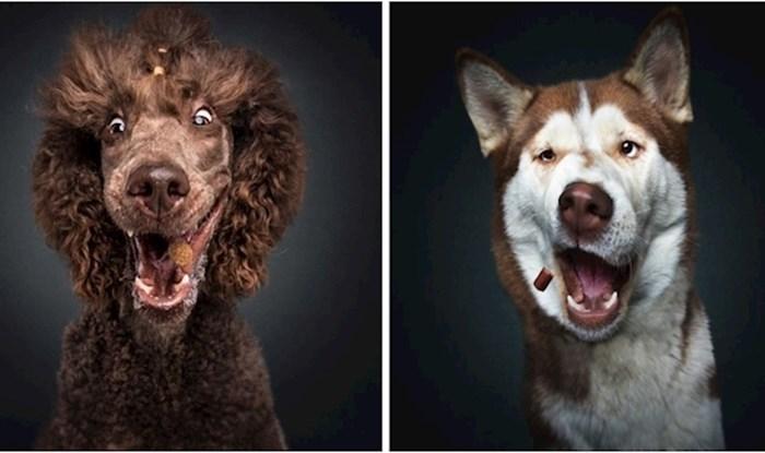 Urnebesne fotke pasa koji se trude uhvatiti hranu dok ona još leti u zraku