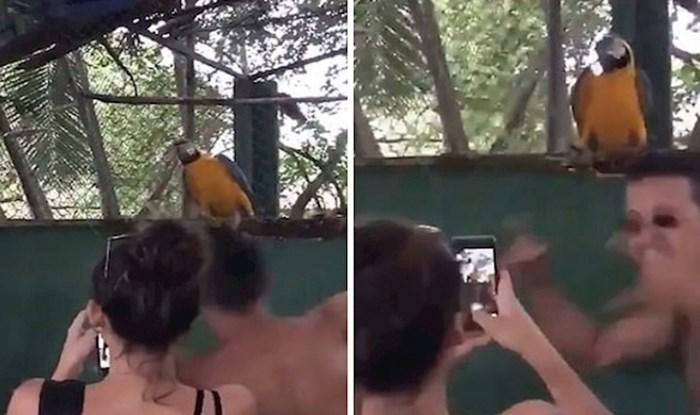 VIDEO Rasplesani papagaj oduševio je milijune ljudi diljem svijeta