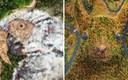 Umjetnik stvara nevjerojatne slike pomoću Photoshopa, prirodu još nismo vidjeli na ovaj način