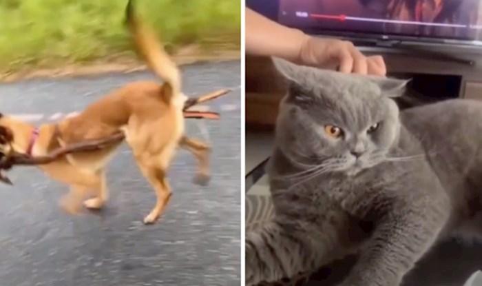 VIDEO Kućni ljubimci nekad znaju totalno poludjeti; njihove reakcije nasmijat će vas do suza