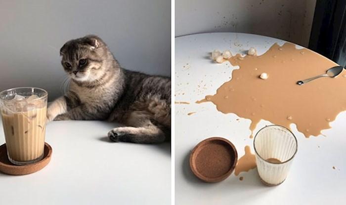 Ovaj Twitter profil zove se 'Zašto bi trebali imati mačku', evo 15 razloga zašto