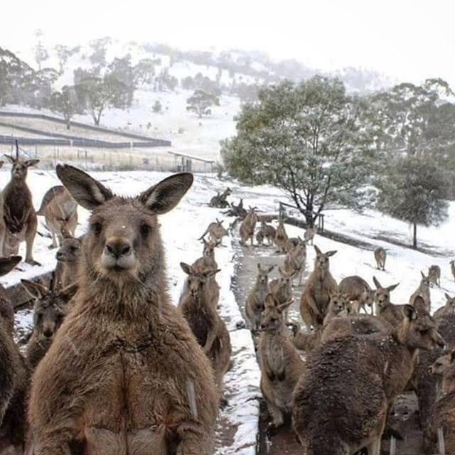 13 .Kao da pokušavaju pobjeći od zime u Australiji.