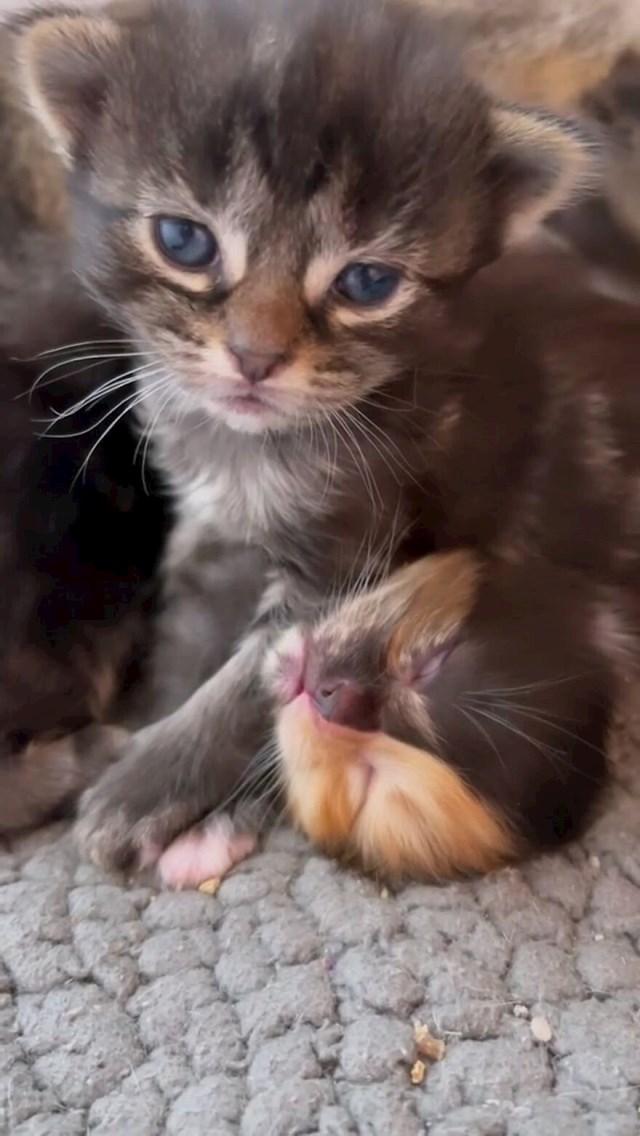 """""""Mame i mačići bit će dostupni za posvajanje za nekoliko tjedana! Do tada ostaju u udomiteljskoj kući sa mnom! """""""