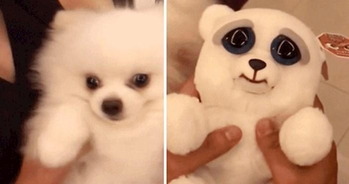 Ovaj pas i plišani medvjedić imaju jednu nevjerovatnu sličnost