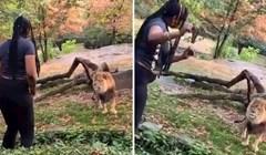 VIDEO Ova žena popela se u prostor s lavovima u zoološkom vrtu u New Yorku kako bi im se javila