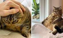 Ova bucmasta mačka ima najsmješnije poze, a na Instagramu je prati čak 302 tisuće ljudi