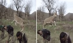 Ova talentirana koza spremna je svoje umijeće podijeliti s cijelim svijetom