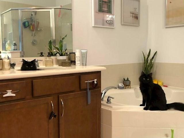#4 Udomila sam mačku, ali ostavila njenog brata, pa sam se morala vratiti nekoliko dana kasnije i udomiti i njega.