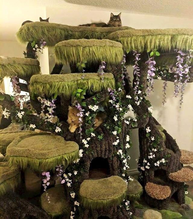 Šuma za mačke u dnevnom boravku.