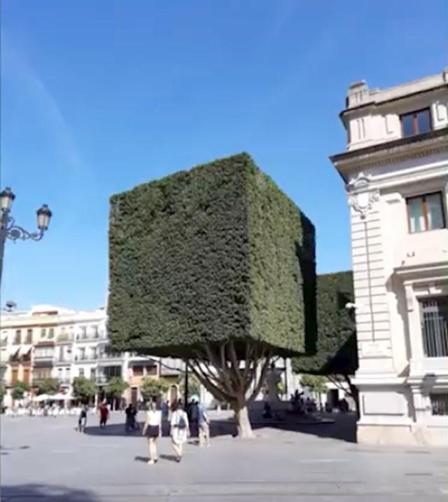 #13 Krošnje stabala savršenih oblika.