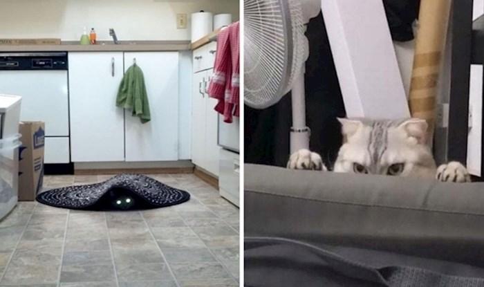 17 fotografija mačaka kojih se nećete moći lako riješiti