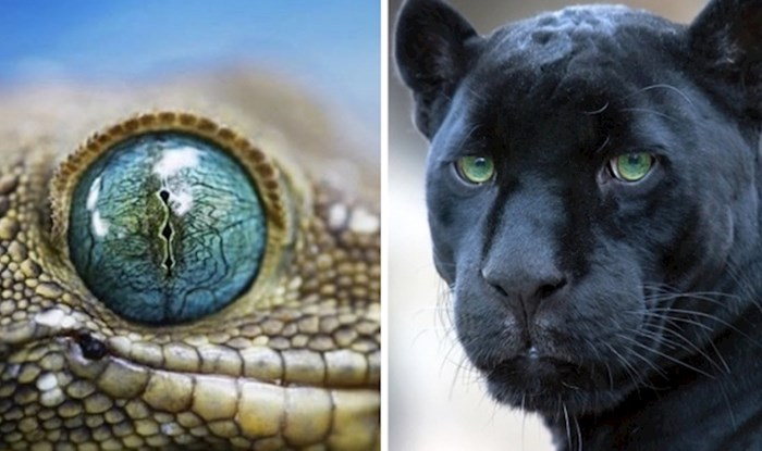 20 fotografija životinja s predivnim očima u krupnom planu