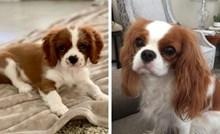 15 pasmina koje zauvijek izgledaju poput štenaca
