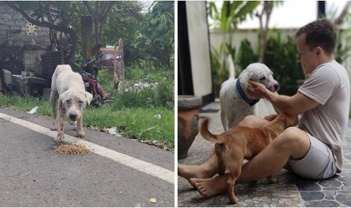Ovo je jedan sretnik kojeg su spasili s ulica Balija, zahvaljujući dobrom čovjeku sad ima novi život