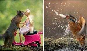 Fotkao je divlje životinje 5 godina; ovo je njegovih 30+ savršeno tempiranih fotografija