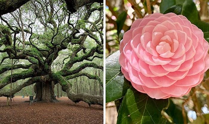 U ovoj internetskoj grupi ljudi dijele primjere botaničkih čuda koje osvježavaju dušu