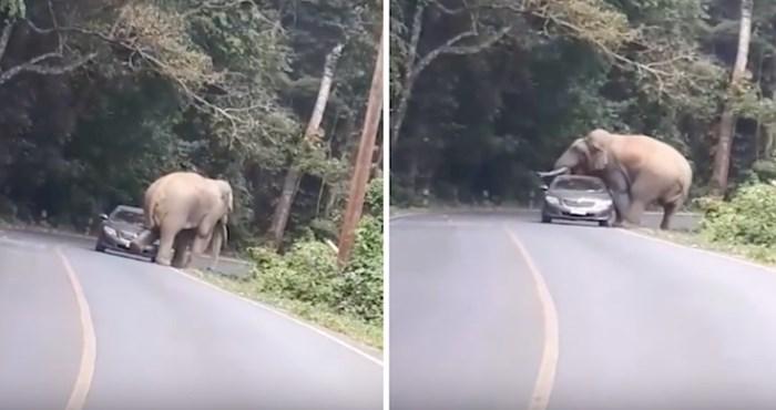 VIDEO Ovaj slon jednostavno nije htio dopustiti vožnju planinskom cestom