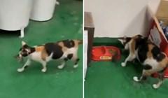 Ova mačka svoj ručak odlučila je podijeliti s najboljim prijateljem