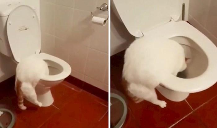 VIDEO Ne, ovo nije još jedan video mačke koja je naučila na toalet, pogledajte čega se dosjetila