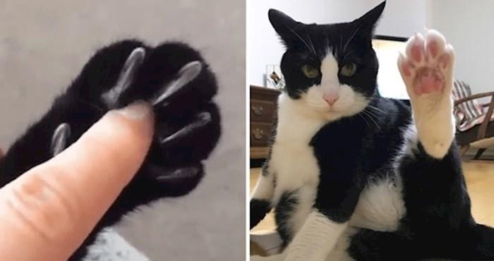 Neobična i jedinstvena obilježja s kojima se mogu hvaliti samo mačke