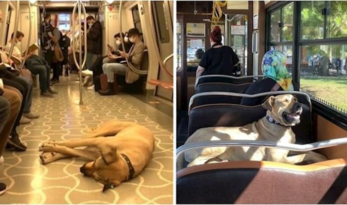 Ovaj pas lutalica privukao je pozornost u Istanbulu jer se redovno vozi javnim prijevozom