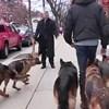 VIDEO Ne treba mu povodac za šest pasa, njih veže puno snažnija veza