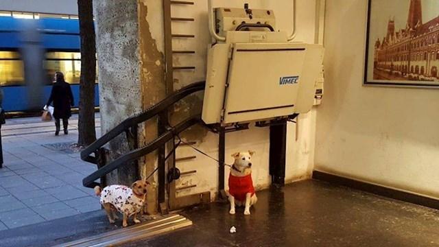 Franka i Brko nisu obukli kabanice zbog kiše. Oni su toliko slatki da se moraju zaštitit od slina drugih pasa.