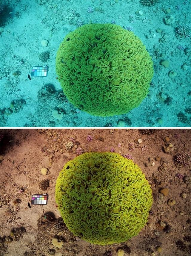 Boja algoritma ispravlja slike da bi pokazala kako bi morski život izgledao na površini
