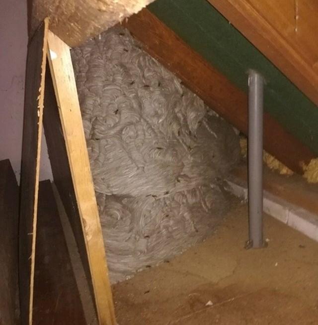 """""""Ovo gnijezdo osi nalazi se na tavanu...vrijeme je za preseljenje."""""""