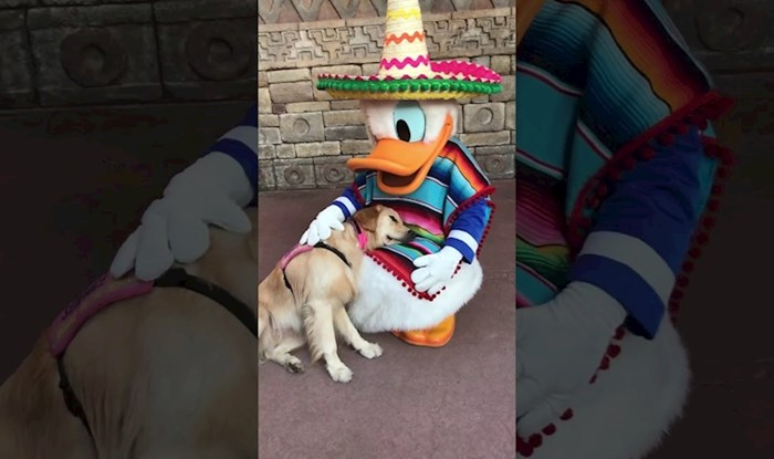 VIDEO Rastopit će vas reakcija ovog psa na napoznatijeg patka u svijetu