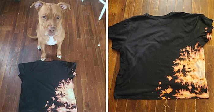 Ovaj pit bull slučajno je redizajnirao običnu majicu svog vlasnika u jednu izvanrednu