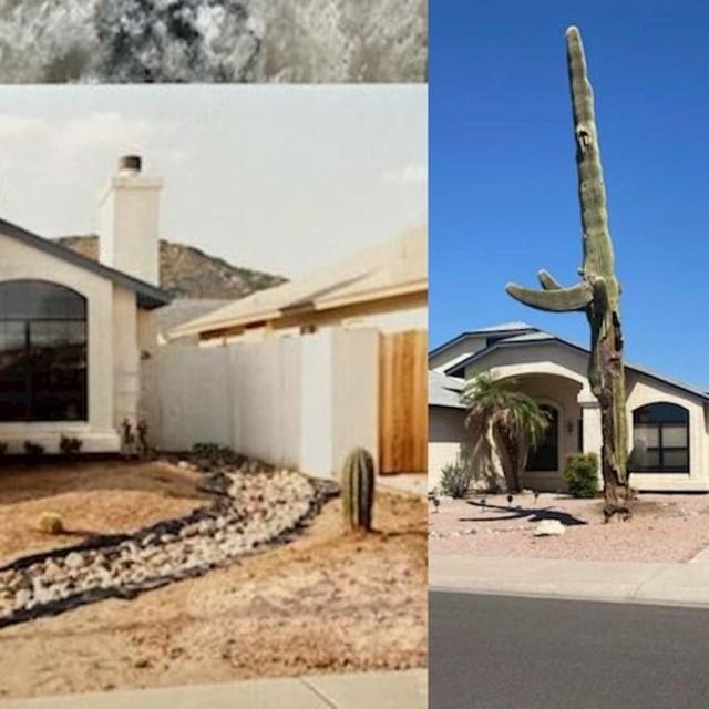 """""""Ovaj Saguaro kaktus koji su moji roditelji posadili prije 30 godina."""""""