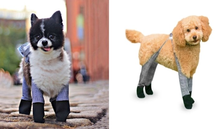 Ovo tvrtka izrađuje čarape za pse kako bi im šape zimi ostale tople