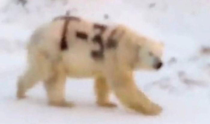 Okrutni zlostavljači životinja nacrtali su T-34, ime sovjetskog tenka na polarnog medvjeda