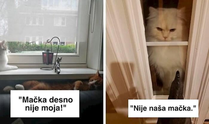 Ova Facebook grupa prepuna je fotki mačaka koje su se doslovno odlučile same udomiti