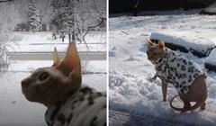 VIDEO Ova bezdlaka mačka inzistirala je na odlasku u šetnju, pogledajte kako je to završilo