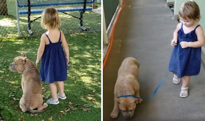 VIDEO Bolesni pit bull iz skloništa za pse osvojio je srce ove 2-godišnjakinje, od tada su nerazdvojni
