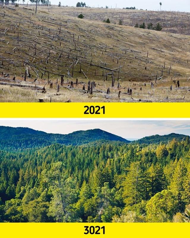1. Šume bi ponovno izrasle svugdje na Zemlji.