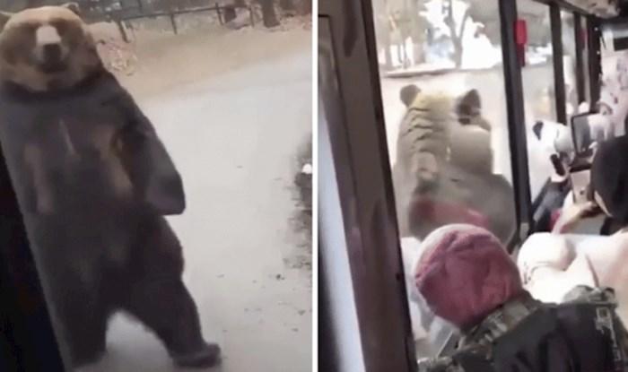 Ovaj medvjed prošetao se kraj školskog autobusa poput čovjeka