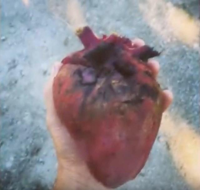 #14 Šečerna repa u obliku srca.