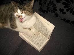 Ogromna slika maca