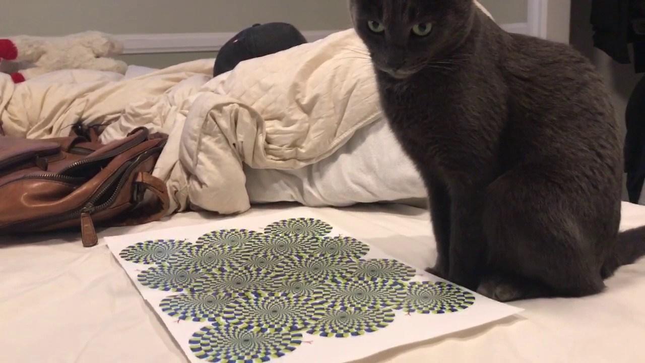 blacl djevojka maca