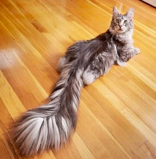 Najkitnjastiji rep na svijetu!