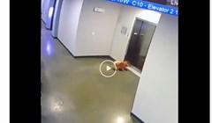 VIDEO Vlasnica je ušla u lift s povodcem, a psić je ostao ispred kad je dizalo krenulo...