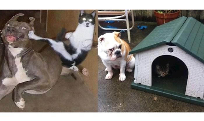 """Kad vidite ove fotke, shvatit ćete izreku """"vole se kao pas i mačka"""""""