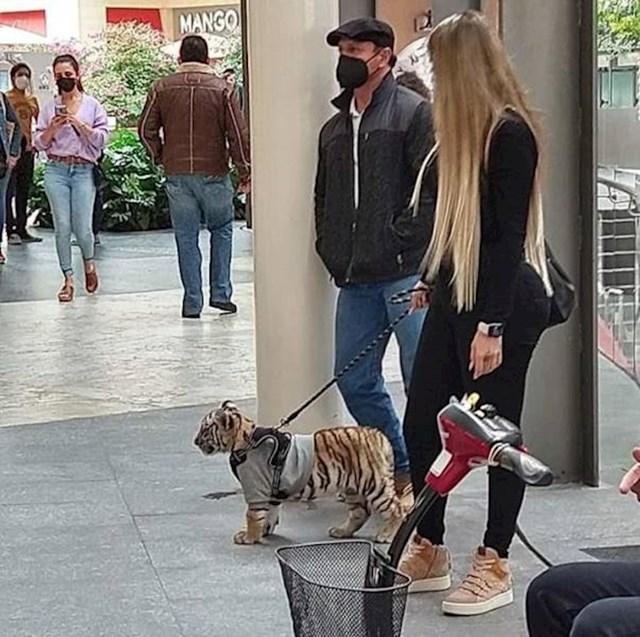 12. Pametnica koja u prepunom trgovačkom centru šeta svog bengalskog tigra
