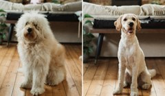 Odveli su svoje pse na šišanje i uvjereni su da su im dali krive pse