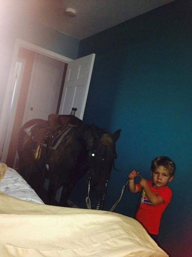 Probudio me s ovim prizorom u sobi i rekao da je konju vruće pa ga je uveo u kuću pod klimu