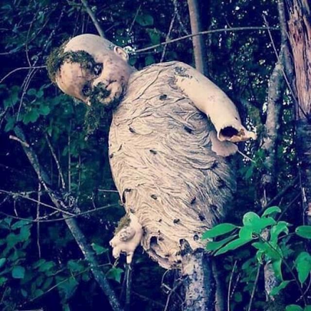 Gnijezdo stršljenova