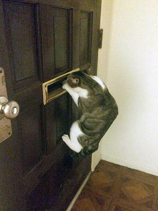 Ovako moja maca dočekuje mog dečka